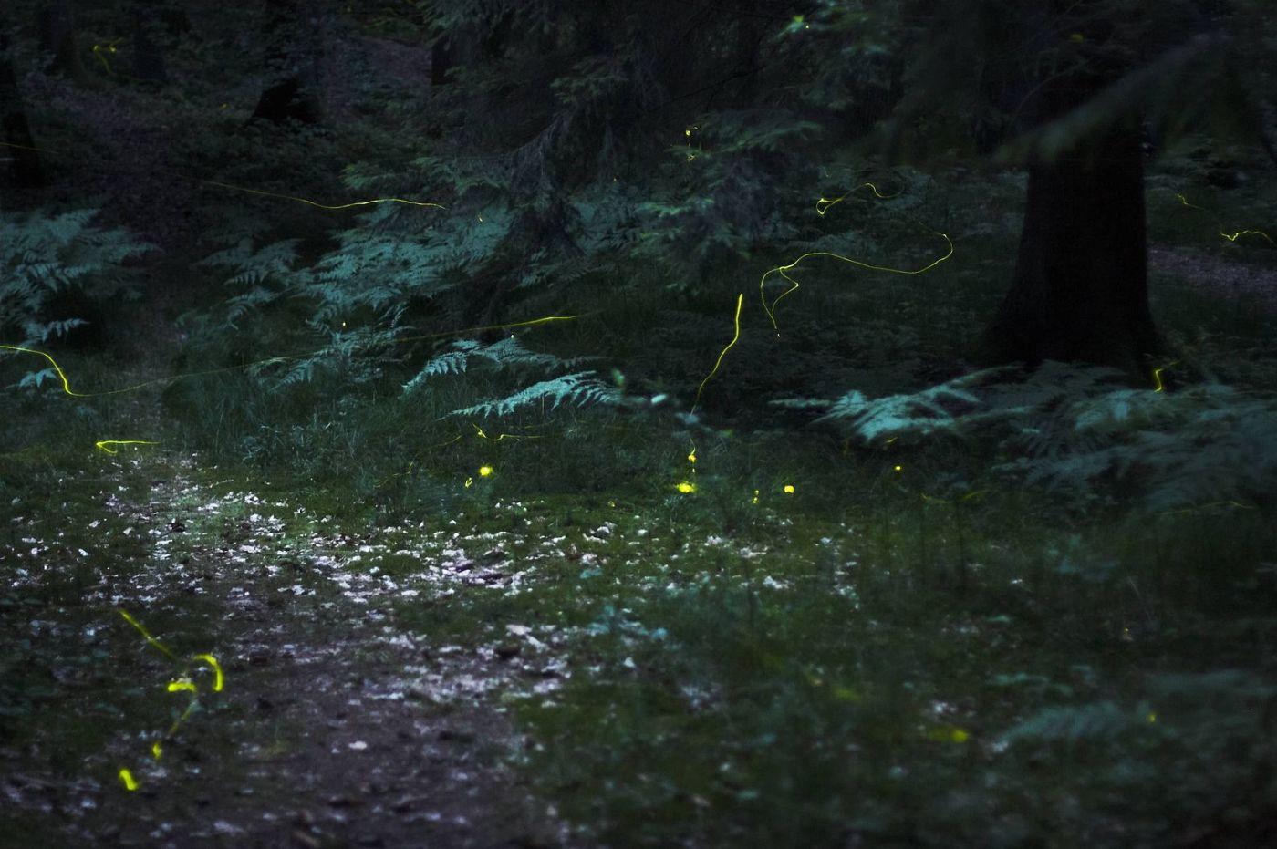 Firefly dating